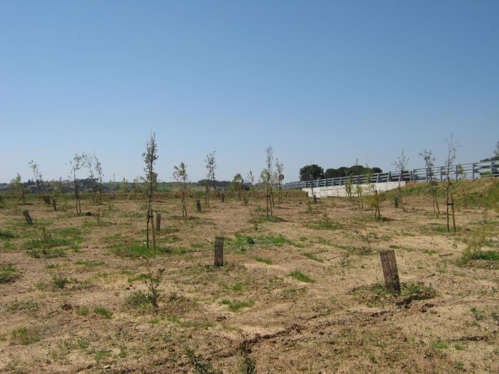 Plantacions naturalitzades